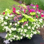 Caring For Summer Flower Planters