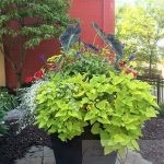 Spring Checklist for Container Plantings