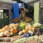 Festive Fall Displays