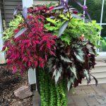 17 Favorite Summer Planters